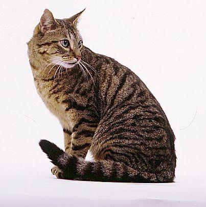 Brown Female Cat Names