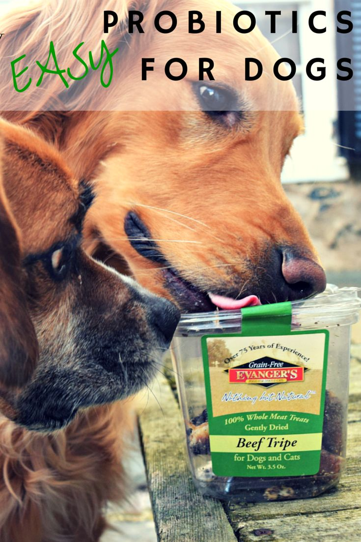 Tripe is an easy way to introduce more probiotics into your dog's diet. Check out @MyDogLikes' review of @evangerspet and enter our #giveaway sponsored by @chewy