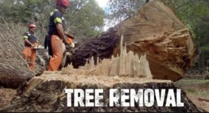 The Duluth average tree removal cost