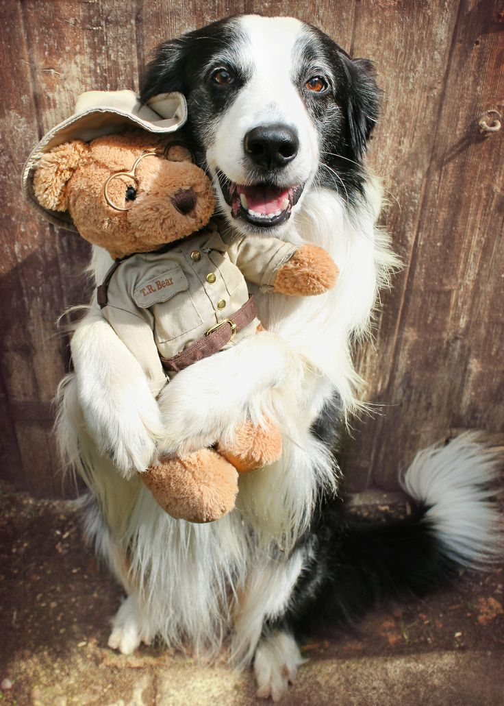 "megpricephotography:  Barney gives teddy a cuddle! Barney's been doing the ""Hug"" trick with other objects for a while, however, holding the ..."