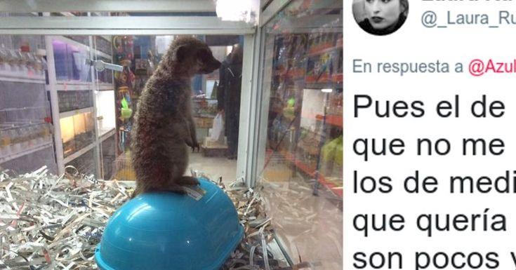 Respuesta de las autoridades por el caso de la suricata expuesta en una tienda de animales de Granada #suricata #suricatas #granada #animal #animales #maltratoanimal #españa