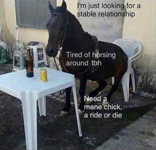 Horse, Meme, Image, Funny animal, Internet meme, Pun Meme: I'm just looking for a stable relationship Tired of horsing around tbh Need mane chick, a ride or die