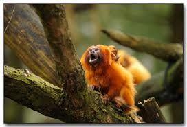 Amazon Rainforest Facts for Kids - Tropical Rainforest Facts