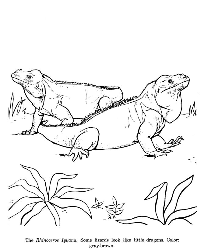 459 best animals- coloring pages images on pinterest | coloring ... - Rainforest Insects Coloring Pages