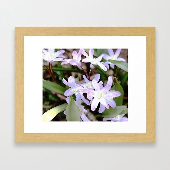 Delicate Beauty - Glory In The Snow - Pink Framed Art Print