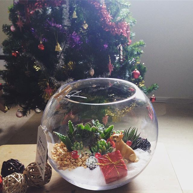 Pet theme #succulent #terrarium makes awesome Christmas gift. Pre order one today. Link in bio. .  .  .  .  .#succulents #succulentlove #succulentlover #succulentaddict #succulentcity #terrariums #terrariumlove #etsyshop #etsyseller #etsyorder #christmasgift #homedecor #plantsmakepeoplehappy #labrador  #petdog #animallover
