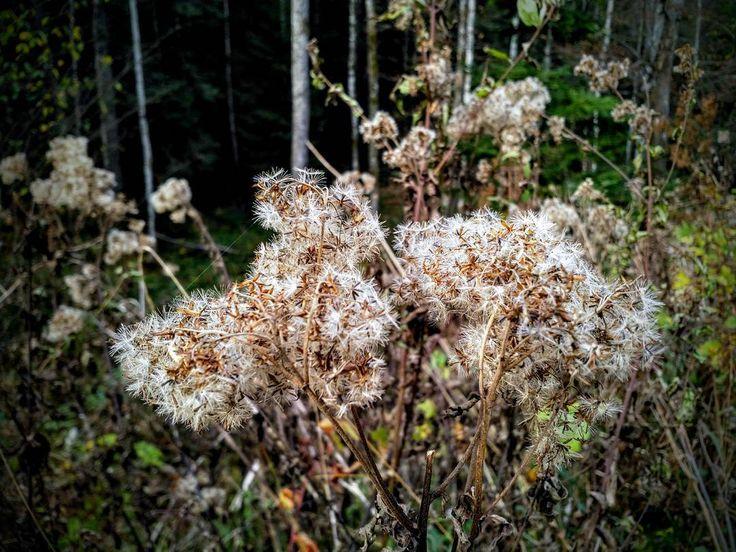 Pustekuchen. Äh... Blumen.  #Naturmomente #Schwarzbubenland #Solothurn #Nunningen #Schweiz  #photooftheday #magicplaces #kraftorte #switzerland #switzerlandpictures #magicswitzerland  #nature #naturelovers #green #forest #fall #autumn #sky #mountains