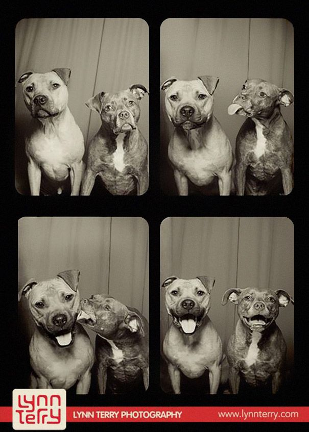 The Cutest Photos Of Dogs In A Photobooth