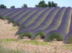 Tourisme Greoux les Bains, Provence. Location La Soleiade Verdon, un must au temps des lavandes