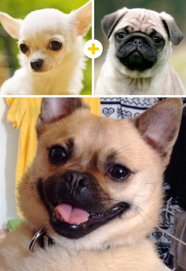15Encantandores perros que son elresultado demezclas poco comunes