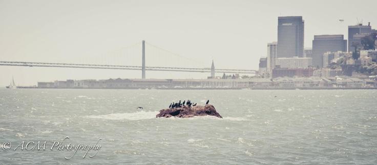 San Francisco water