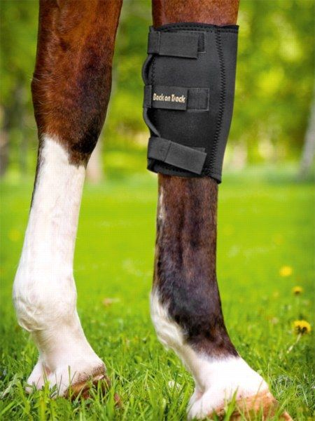 English Tack Store - Back on Track Knee Boots, $68.95 (http://www.englishtackshop.com/back-on-track-knee-boots/)