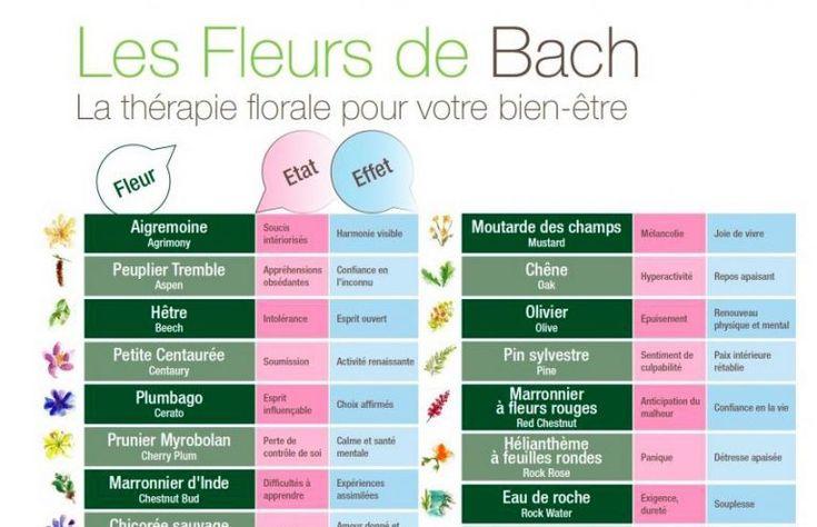 Soignez tous les maux grâce aux fleurs de Bach