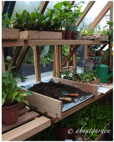 .one day, we will have to build a greenhouse.