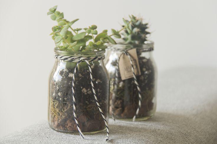 Terrarios en frascos de vidrio reutilizadosCon suculenta
