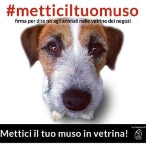 Basta ai cuccioli in vetrina nei negozi di animali, esposti come un profumo, un vestito o un giocattolo. A chiederlo è la petizione #metticiltuomuso lanciata su Change.org