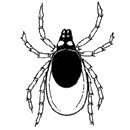 Tick Bites, Causes, Symptoms and Treatment