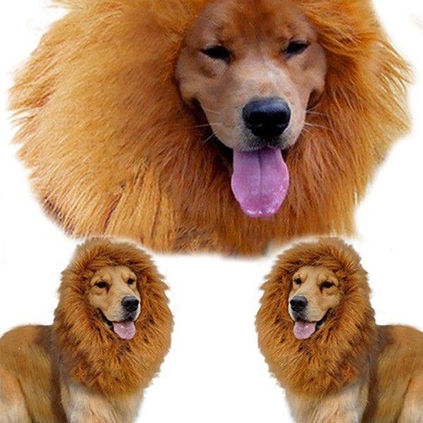 leeuwenmanen hond, leeuwenkraag hond