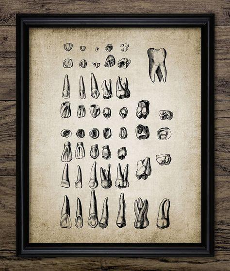 Los dientes humanos impresión anatomía Dental por InstantGraphics