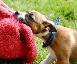Chewing: The Whys and Hows of Stopping a Gnawing Problem : The Humane Society of the United States