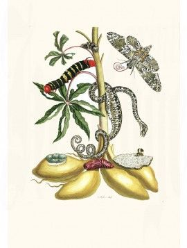 Merian Butterfly prints Snake and moth