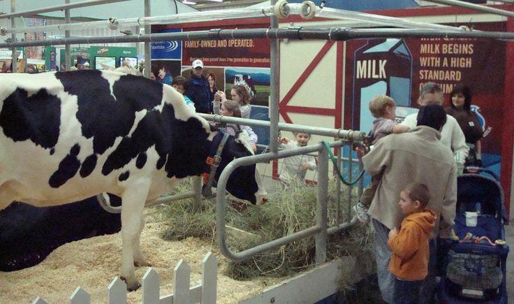 Get up close and personal with Manitoba dairy cows at the Royal Manitoba Winter Fair! Manitoba Winter Fair in Brandon, MB – March 30 – April 4th.