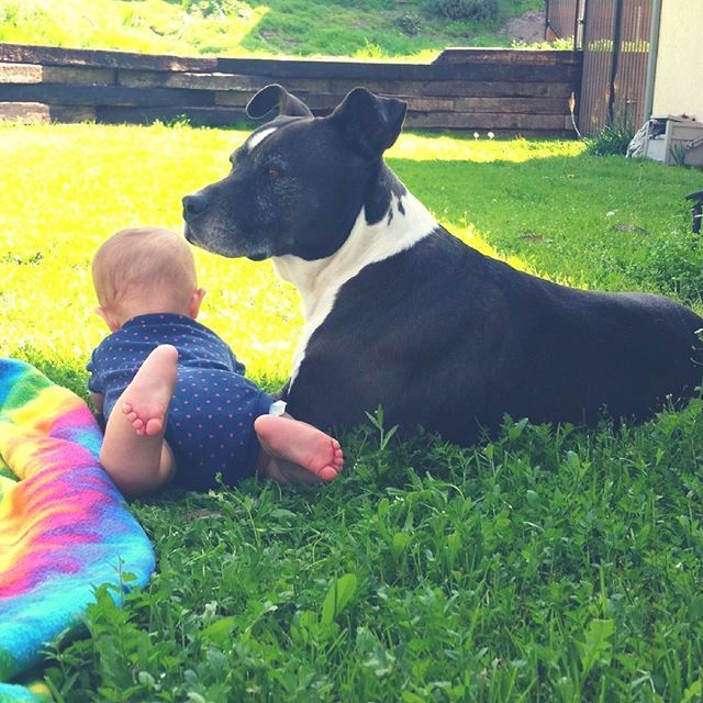 Babies and dogs, is there really anything cuter? Full of Innocence, unjaded by the follies of the world. Happy National Kids and Pets Day.   #Regram via @pawstruck