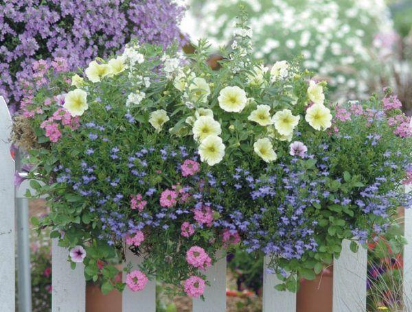 Cara Menanam Bunga Lobelia di dalam Pot - http://bibitbunga.com/blog/cara-menanam-bunga-lobelia-di-dalam-pot/