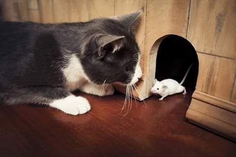 Tom&Jerry