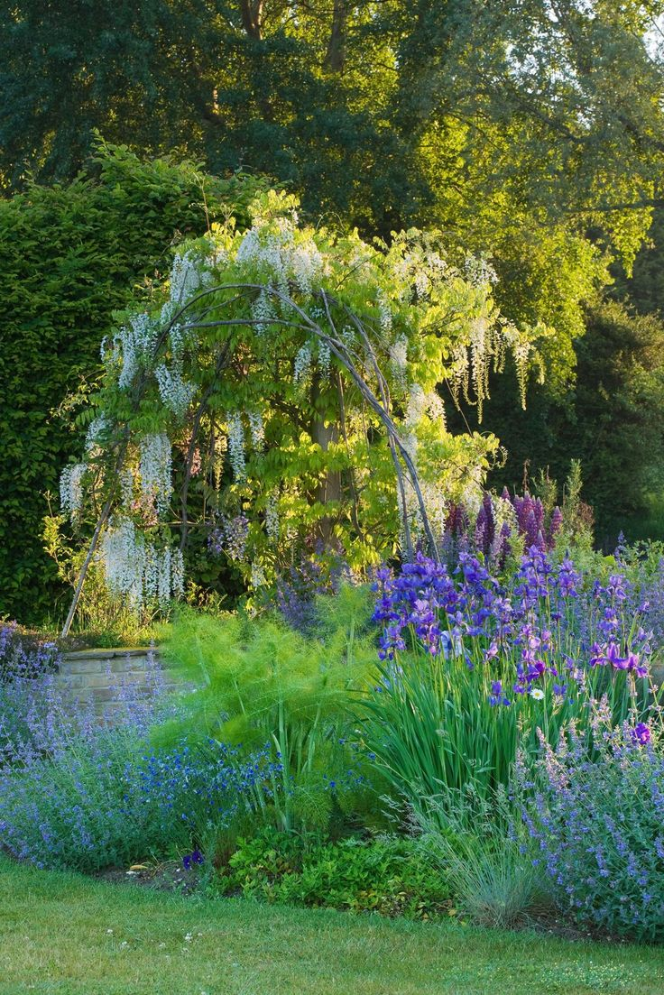Holland park garden gallery brings in annuals from across ontario to - Blue Garden At Narborough Hall In Norfolk Uk Gorgeous White Wisteria Bathed In Dawn