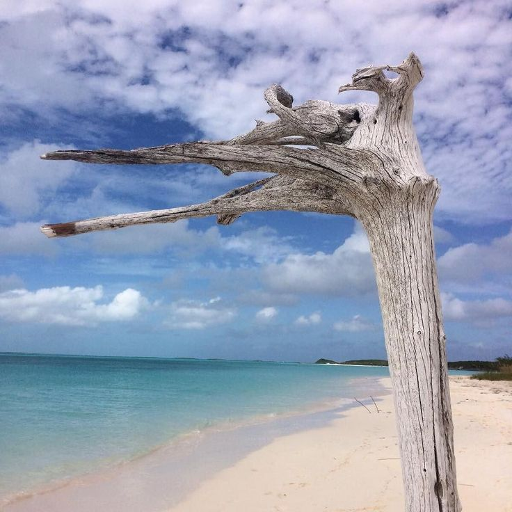 """We always love playing the """"cloud game"""" so let's try it with this piece of driftwood..... what do you see in this branch??  #ispy #hiddenimage #perspective #beachgames #driftwood"""