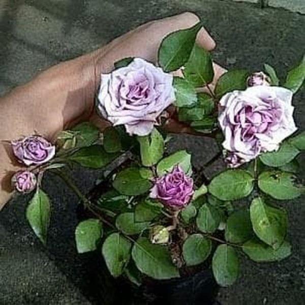 Pin Di Gambar Bunga Terindah