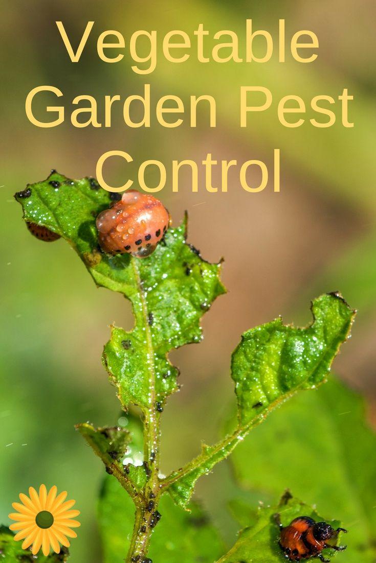 174 Best Garden Pests Images On Pinterest