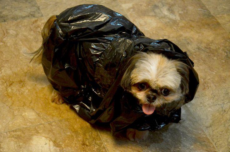 make a plastic bag poncho for your dog