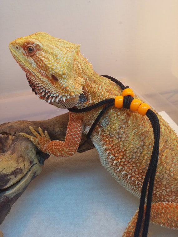 Reptile harness one-size-fits-all Orange by WalkingWithDragons