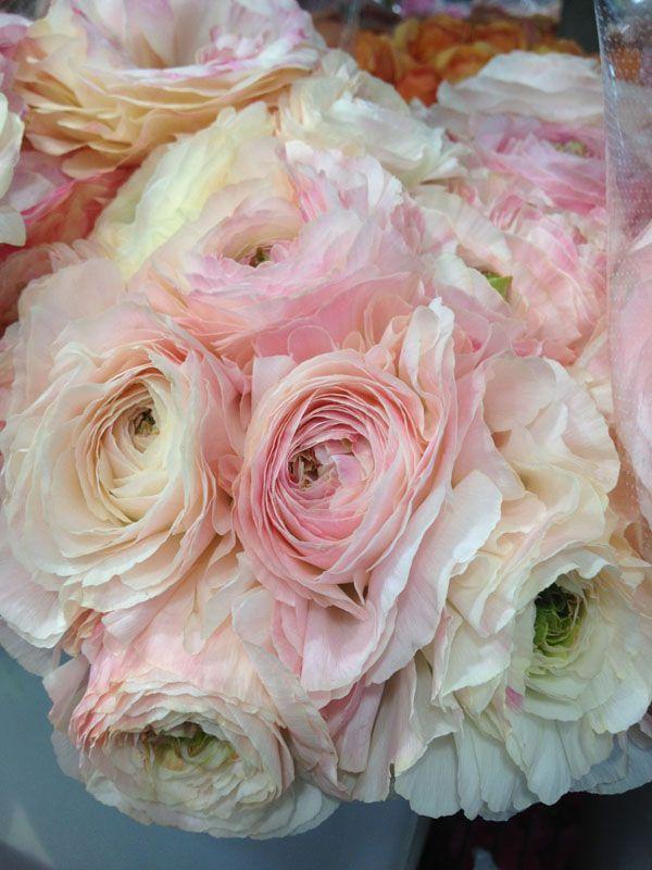 ... Blush Garden Rose Bouquet