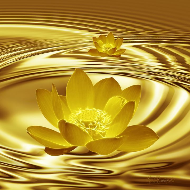 Golden Pond Lotus Flower - Laureenr