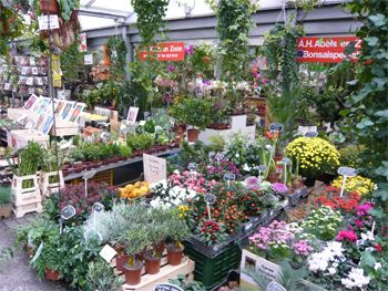 Amsterdam Flower Market and what to expect | Amsterdam Travel Guide