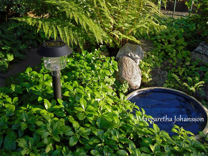 Use LED Landscape Lighting for Your Garden
