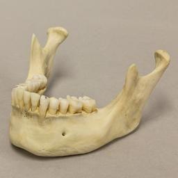2b3d698851f0c023120004b4b631e89c human anatomy environment design?b=t human jaw bone google search skull_jaw pinterest bones
