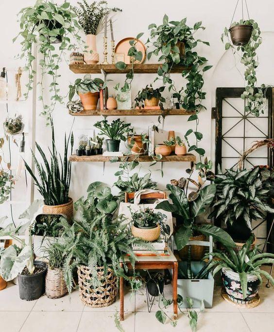 Indoor Jungle;Small Spaces Gardening;idées Pour Aménager
