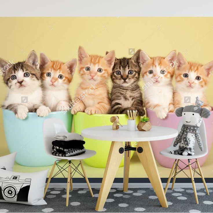 Fotobehang Kittens op een rij   Maak het jezelf eenvoudig en bestel fotobehang voorzien van een lijmlaag bij YouPri om zo gemakkelijk jouw woonruimte een nieuwe stijl te geven. Voor het behangen heb je alleen water nodig! #behang #fotobehang #print #opdruk #afbeelding #diy #behangen #kittens #katten #kat #poes #kater #dieren #dier #baby #schattig