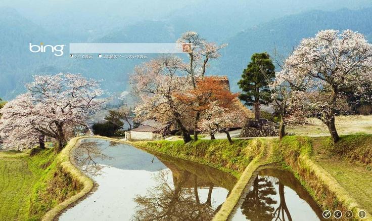 きれいな桜だなぁo('▽'*)