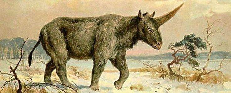 Amerikaanse wetenschappers hebben in Kazachstan een 29.000 jaar oude schedel ontdekt van een Siberische eenhoorn. Dat betekent dat de eenhoorn in dezelfde tijd heeft geleefd als prehistorische mensen.