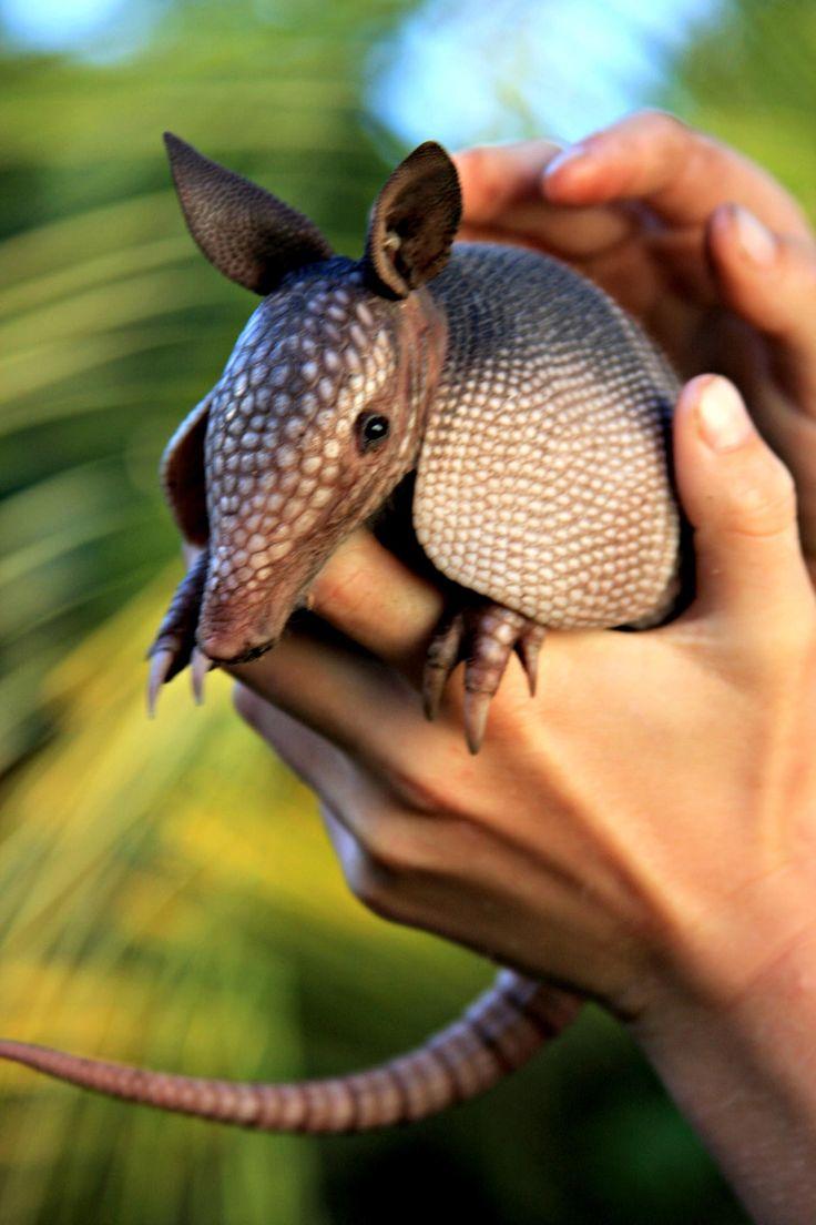 Um dos animais mais ligado à proteção e limites pessoais