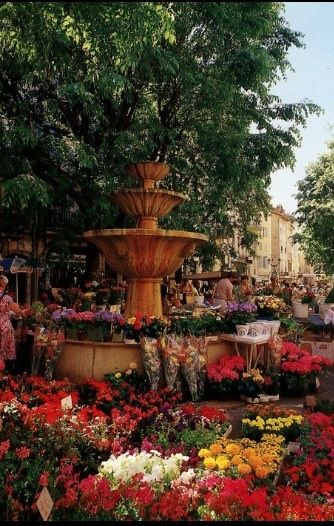 Grasse Flower Market, France - I have been to Grasse a couple of times, but never to the flower market!