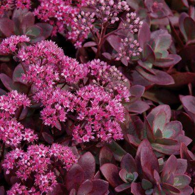 1000 id es sur le th me plantes vivaces sur pinterest for Plante qui aime l ombre