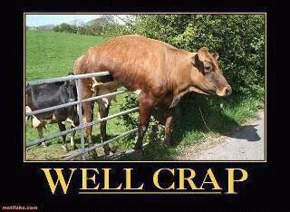 Now what?: Giggle, Well Crap, Animals, Cow, Funny Stuff, Funnies, Humor, Things