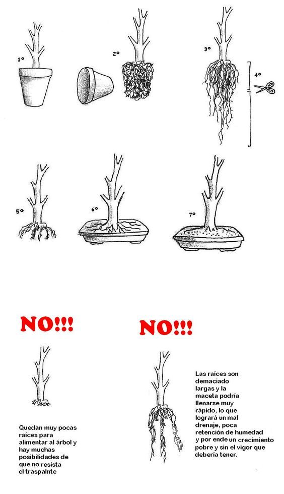 dos and donts and potting methods of bonsai growing