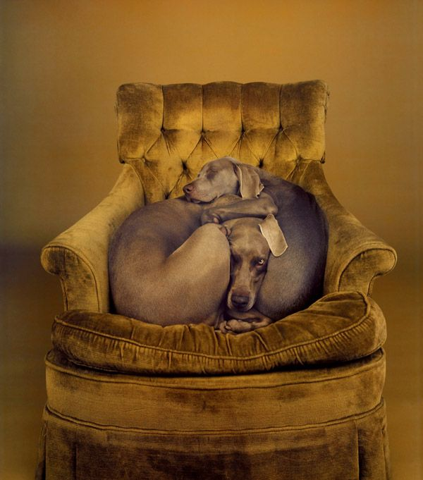 William Wegman, Nest, 1989 This makes my heart melt. It must be a weimaraner trait since mine has to cuddle/spoon with our other dog just like the puppy is in this pic.